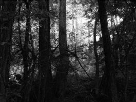 Into the forest by Conceptualert