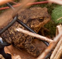 Hello Mr. Toad, I See You Hiding There by Xs9nake