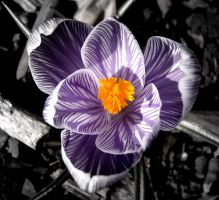 spring flower 5 by shadowsandshades42