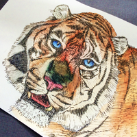 Eye of the Tiger by TheEmmaHunter