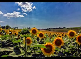 Summer Day by Marcello-Paoli