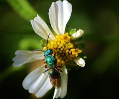Green bug on flower by blackroseangel89