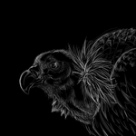 Vulture scratchboard by nightspiritwing
