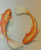 Koi Fish by Shey49