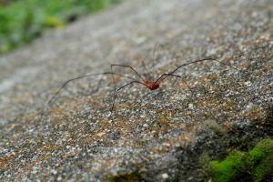 Daddy Long Legs by silentmeg09