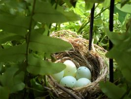 House Finch Nest by BlurVioletOmega
