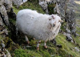 'I'm a sheep. Up a mountain. What about it?' by Geater