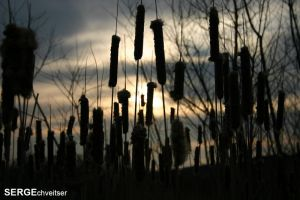 Cat Tails by serge300d