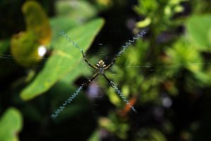 Mexican Spider by danielgregoire