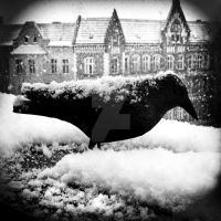 Black Raven in Snow by MichiLauke