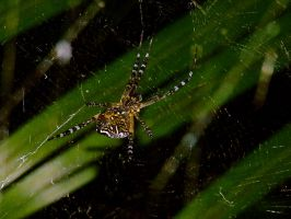 incybinsy_spider by jasonclaude