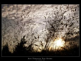 Sun Through The Stems by Metalstorm