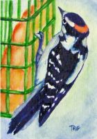 Woodpecker 1 by pixieled