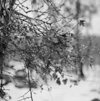Drops and branches by voldemometr