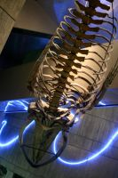 Fossil of aquatic animal by nwalter
