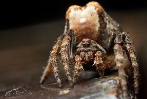 Spider 10-31 by BirdinByNoon