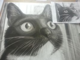 Drawing 1 Pet Drawing Assignment (Chloe) by EternASH