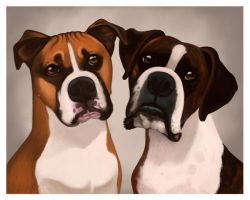 Portrait of Boxers by CharReed