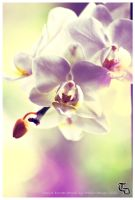 orchidee++ by Gamegear04