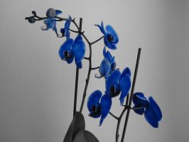 Blue flowers by CrazyTwinz