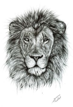Lion by Mixielion