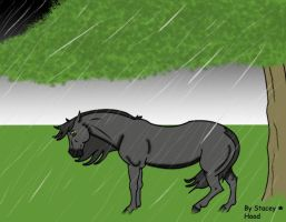 Horse in the rain by oOstaceyOo