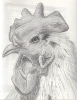 Eye of the Rooster by x0BrokenxGlass0x