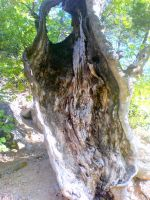 Weird Tree by ISIK5