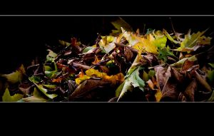 Autumn 2009 - 3 by Rob1962