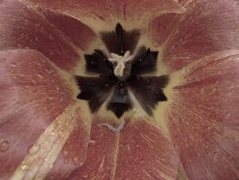 Tulip by a mobile phone. by velar1