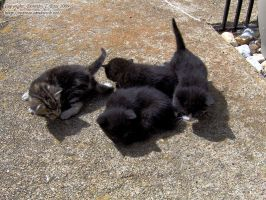 Four Little Kittens by Prima-Donna