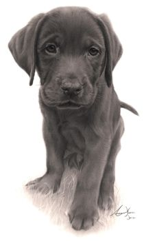 Commission - Labrador Puppy by Captured-In-Pencil