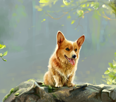 The Welsh Corgi by SalamanDra-S