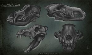 Gray Wolf`s Skull by Azot2016