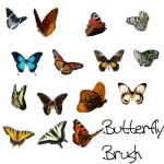 Butterfly Brush by PurlyZig