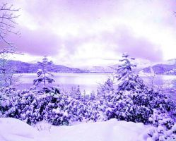Purple Winter by Koto-Nizuma