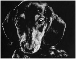 Dachshund drawing by Acacia13