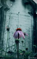 Death Blooms by MyLifeThroughTheLens