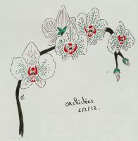 orchidee by atsumimag
