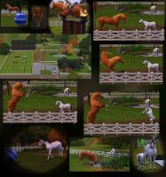 Another Sims 3 collage by MagicWindsStables
