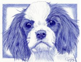 Blue Ballpoint Dog by Cindy-R
