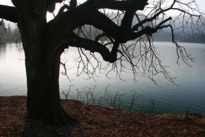 Tree Above The Water by Banana-Workshop