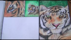 all the tigers together ( one left ) art gcse by abtheartist
