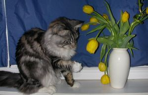Cat in the flower by Flore