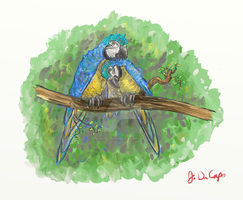Blue And Gold Macaws In Love by sanjouin-dacapo