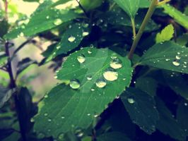 Drops by chauhan03
