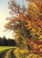 Forest in Autumn by weinrot93