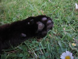Cat's paw by Jugglingwithfire