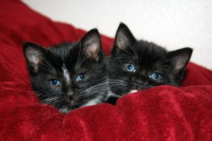 Kittens by tragickatie