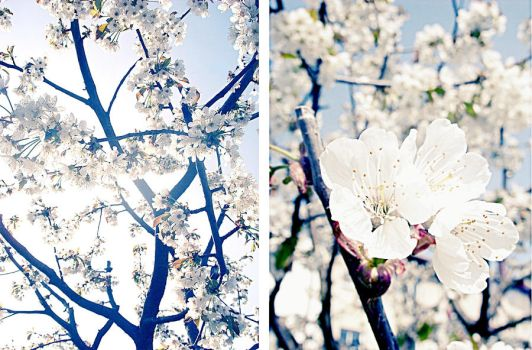 blossoming by neyle